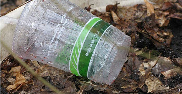 compostable-cup.jpg