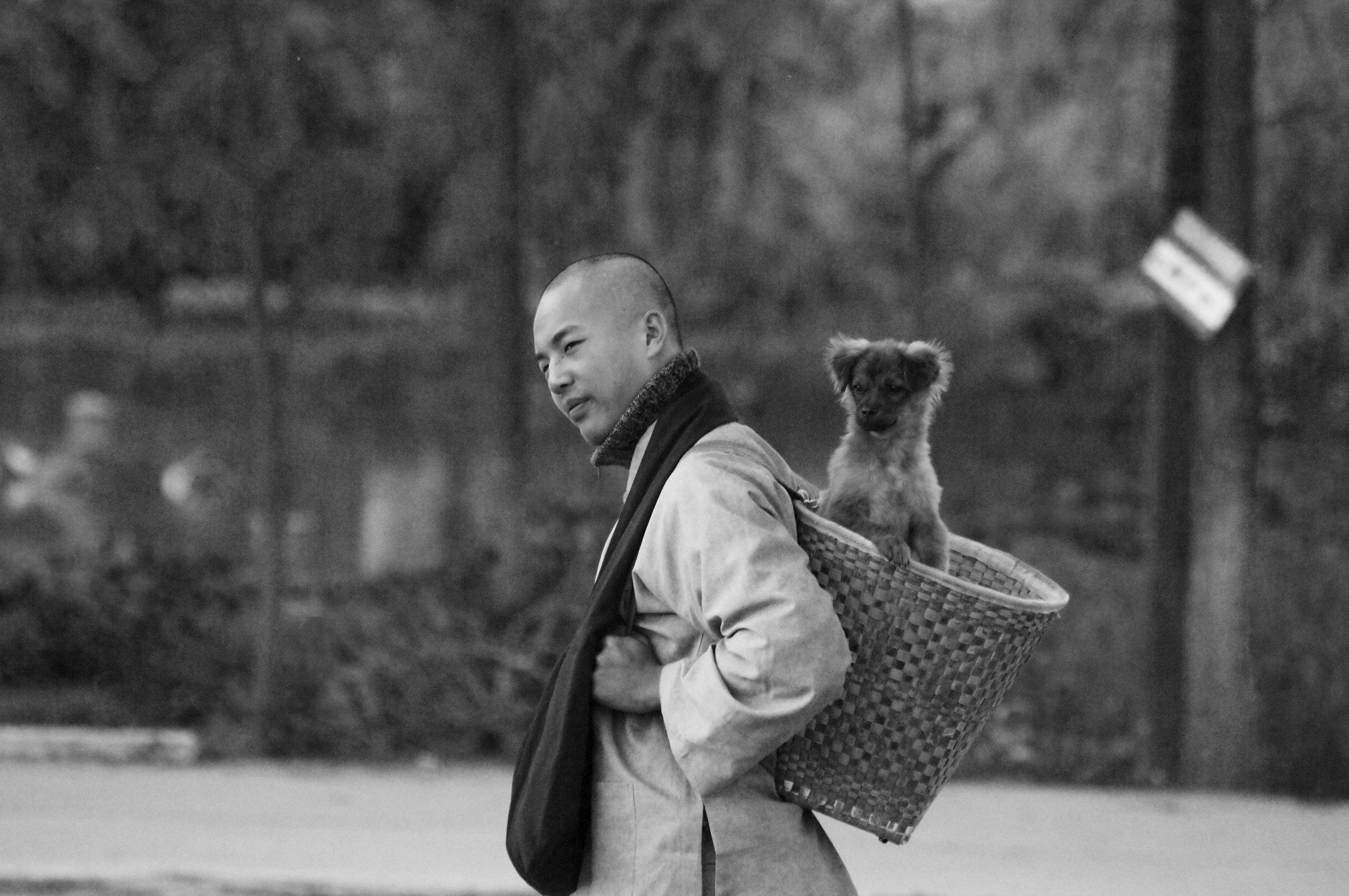 thedog.jpg
