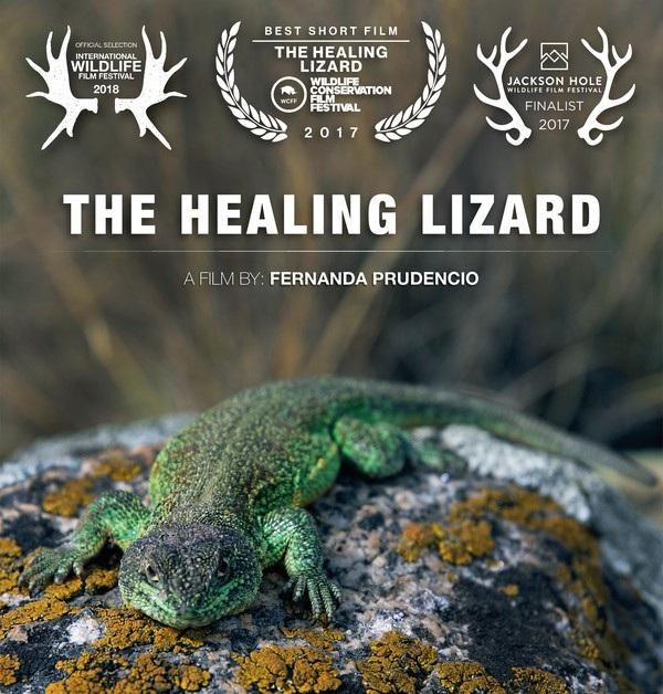 HEALING+LIZARD+%5Bmailchimp%5D.jpg