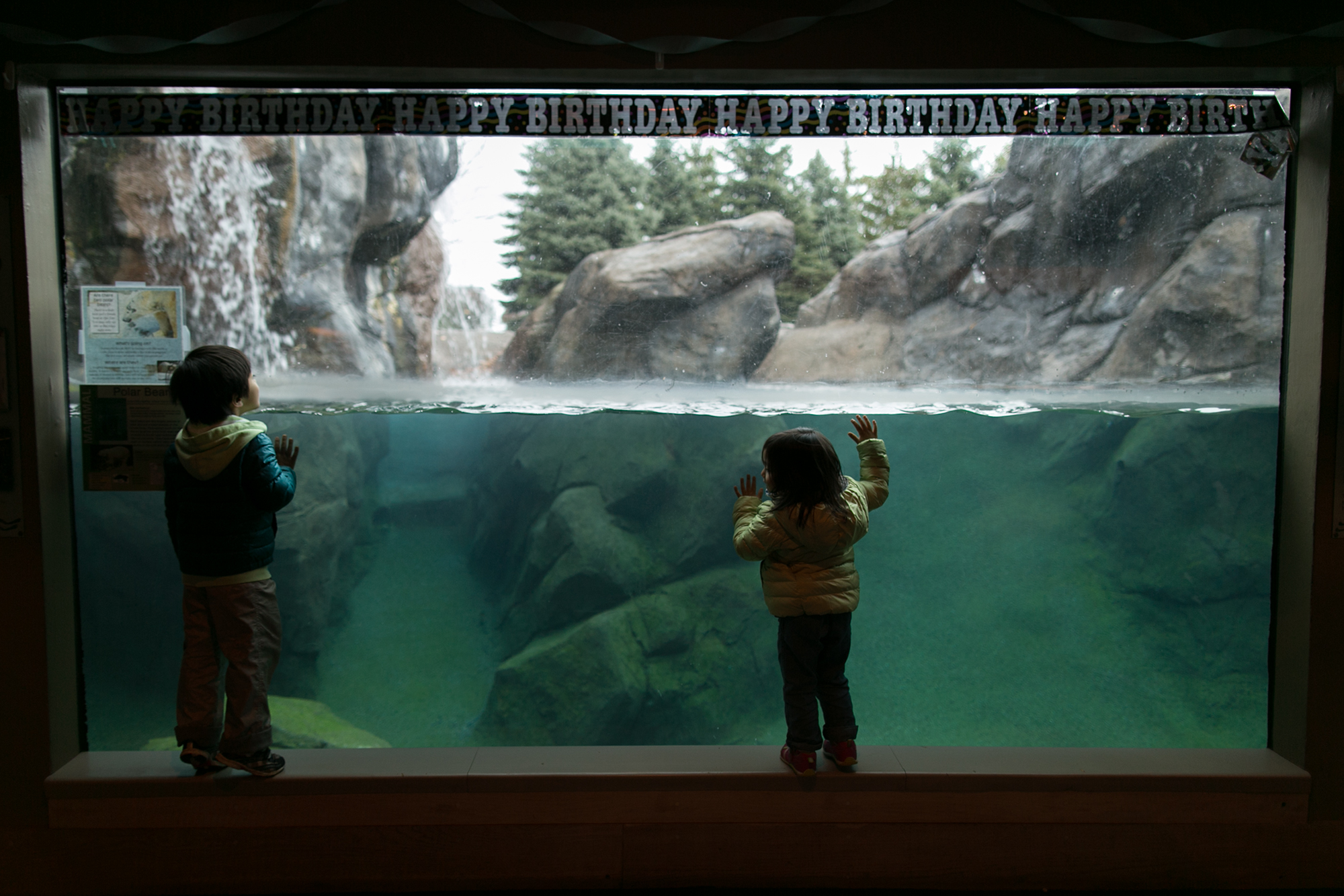 Shoei Kurogi, 5, and Karina Kurogi, 3, of Webster, try to get a better view of the polar bears at Seneca Park Zoo in Rochester on Saturday, November 1, 2014. The zoo was hosting a birthday party for the bears, Zero and Aurora, who both turn 25 this month.