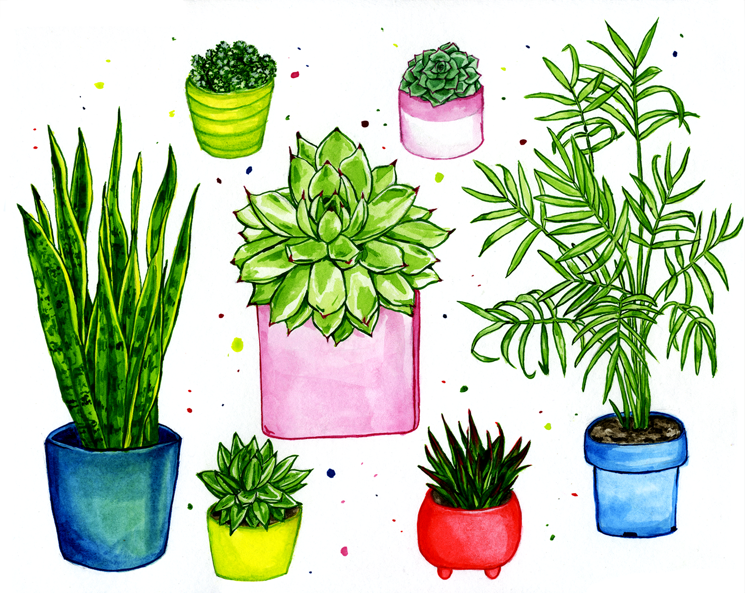 houseplants.png