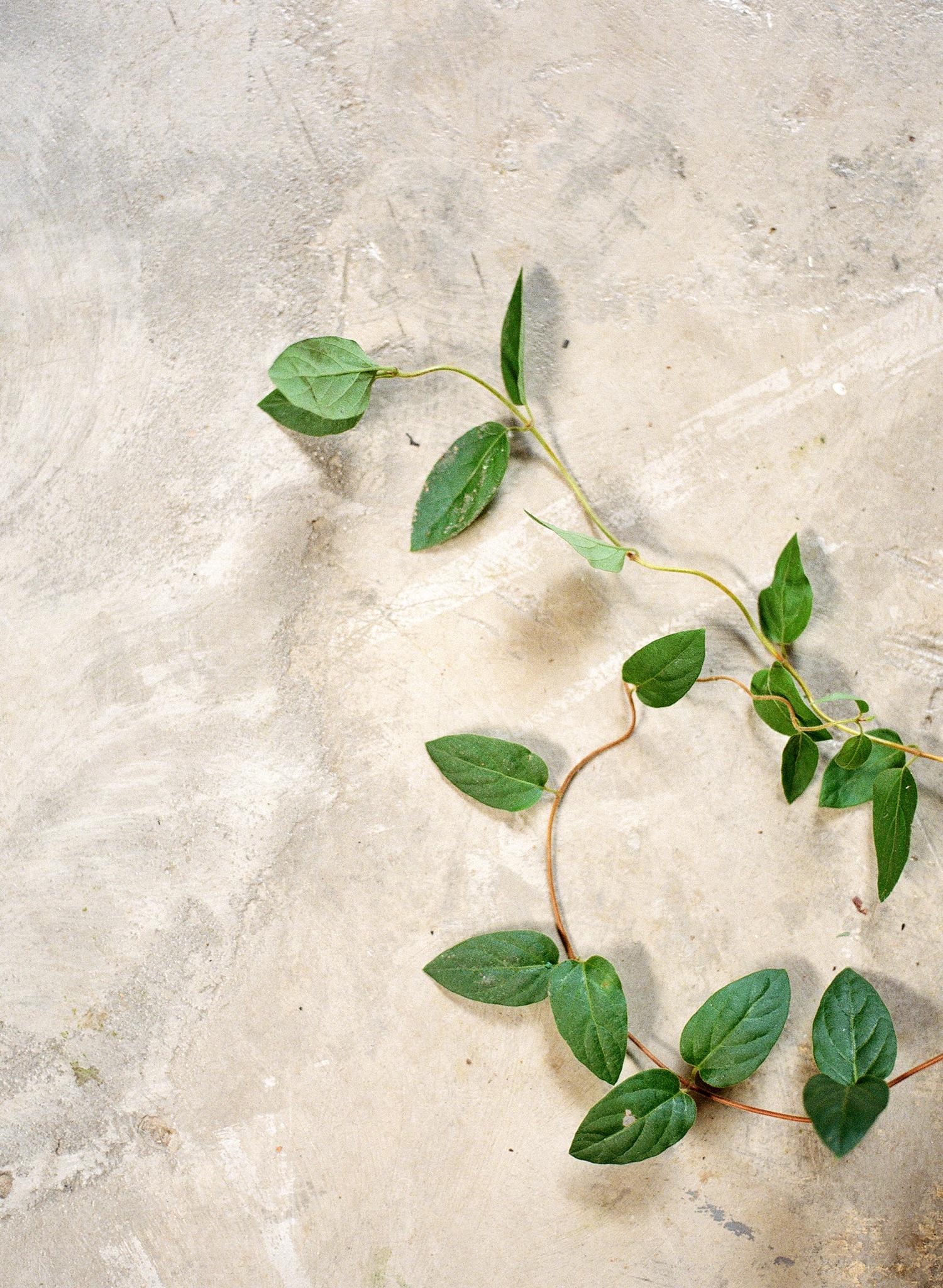 12-vines.jpg