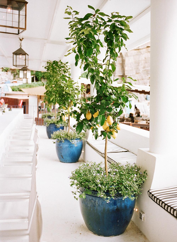6-lemon-tree-villa-treville.jpg