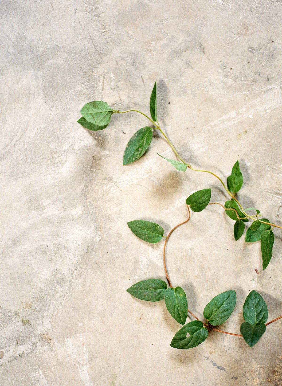 7-vines.jpg