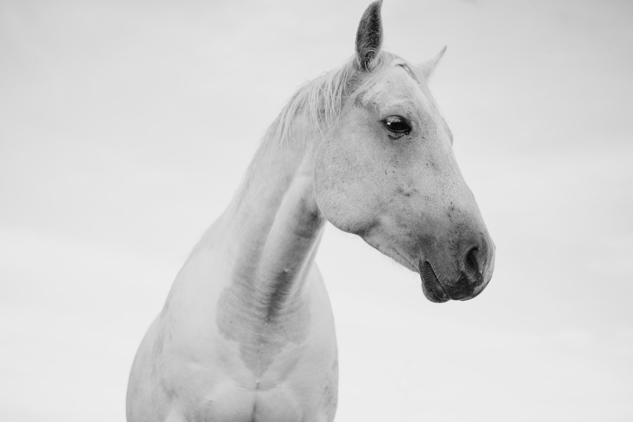 horses_2015_027.jpg