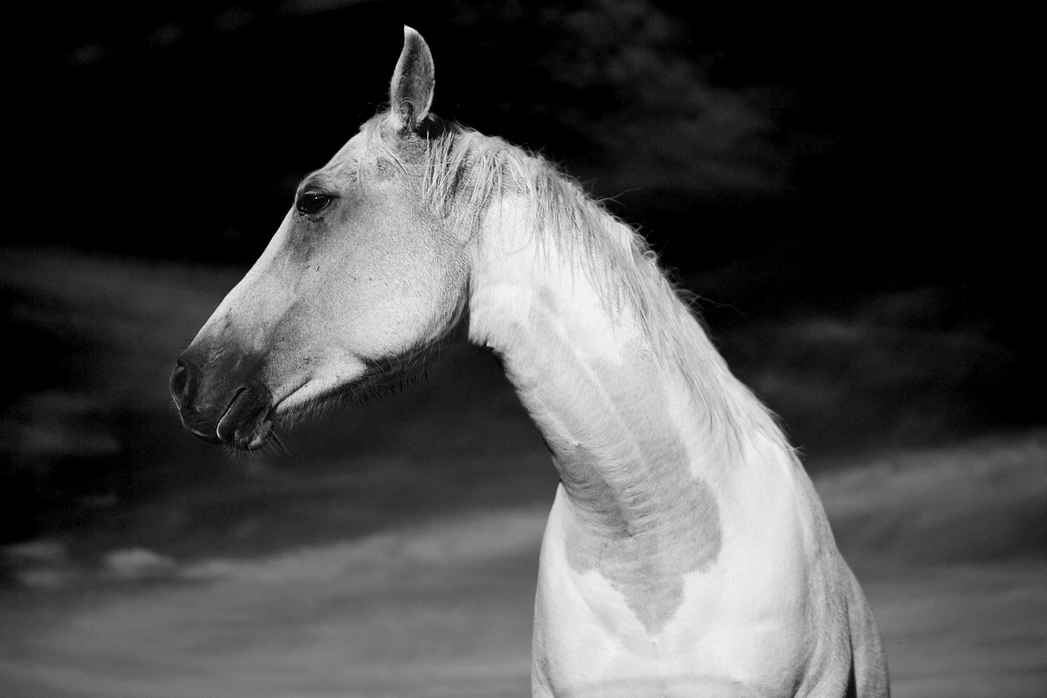 horses_2015_029bwflip.jpg