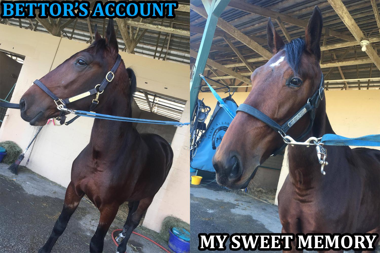 Bettors Account My Sweet Memory Team Allard