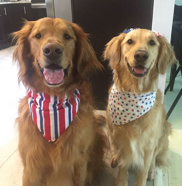 Happy 4th of July!! 🐕 🐕