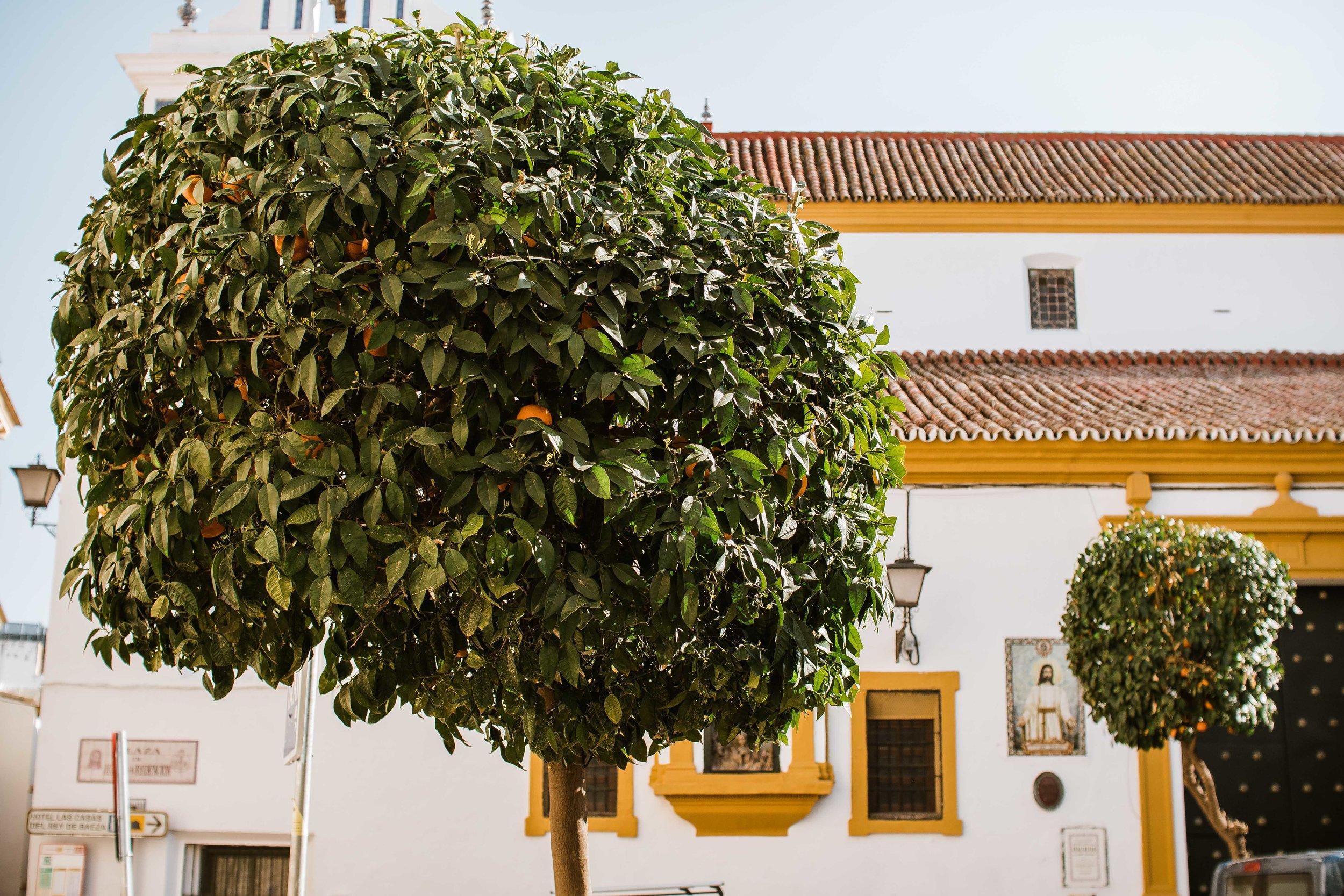 For Blog - Seville-7.jpg