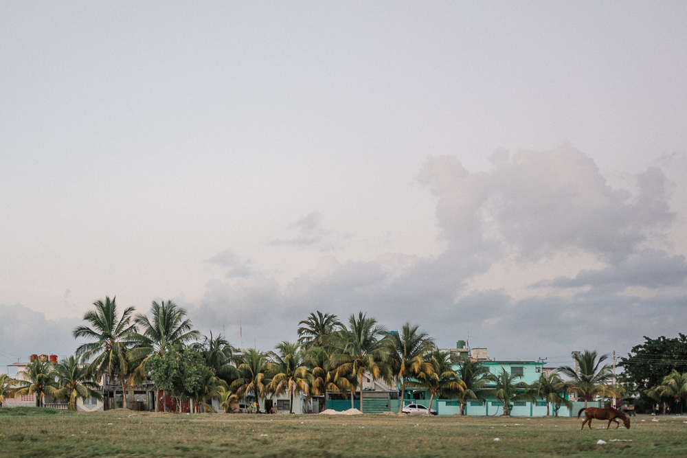 Cuba Cienfuegos Sunset Horse Palm Trees Travel #juliefilter