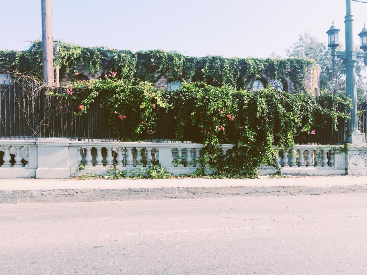 Downtown grass