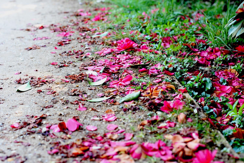 petal_pathways_1.jpg