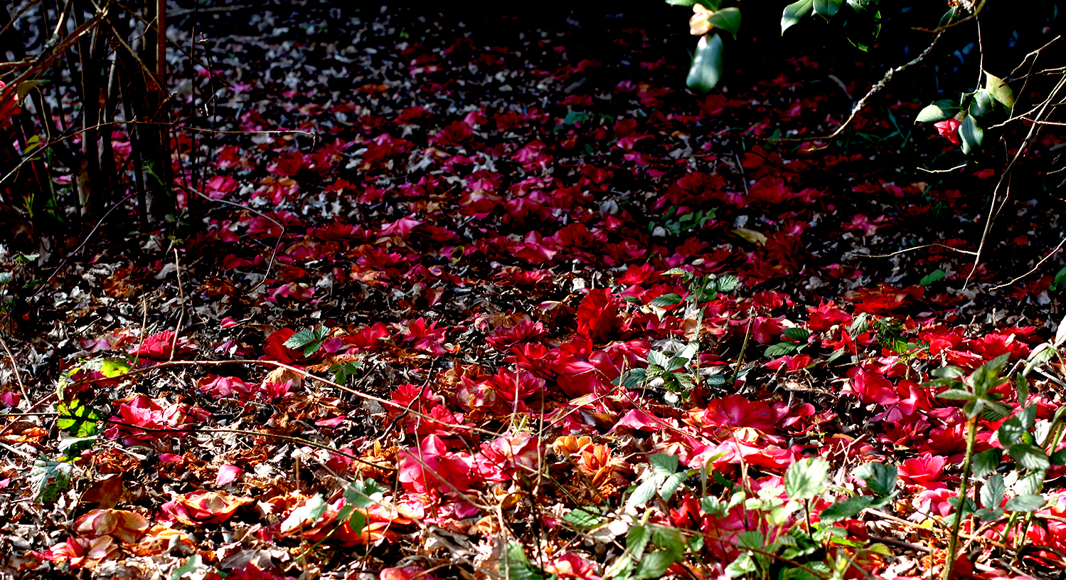 petal_pathways_4.jpg