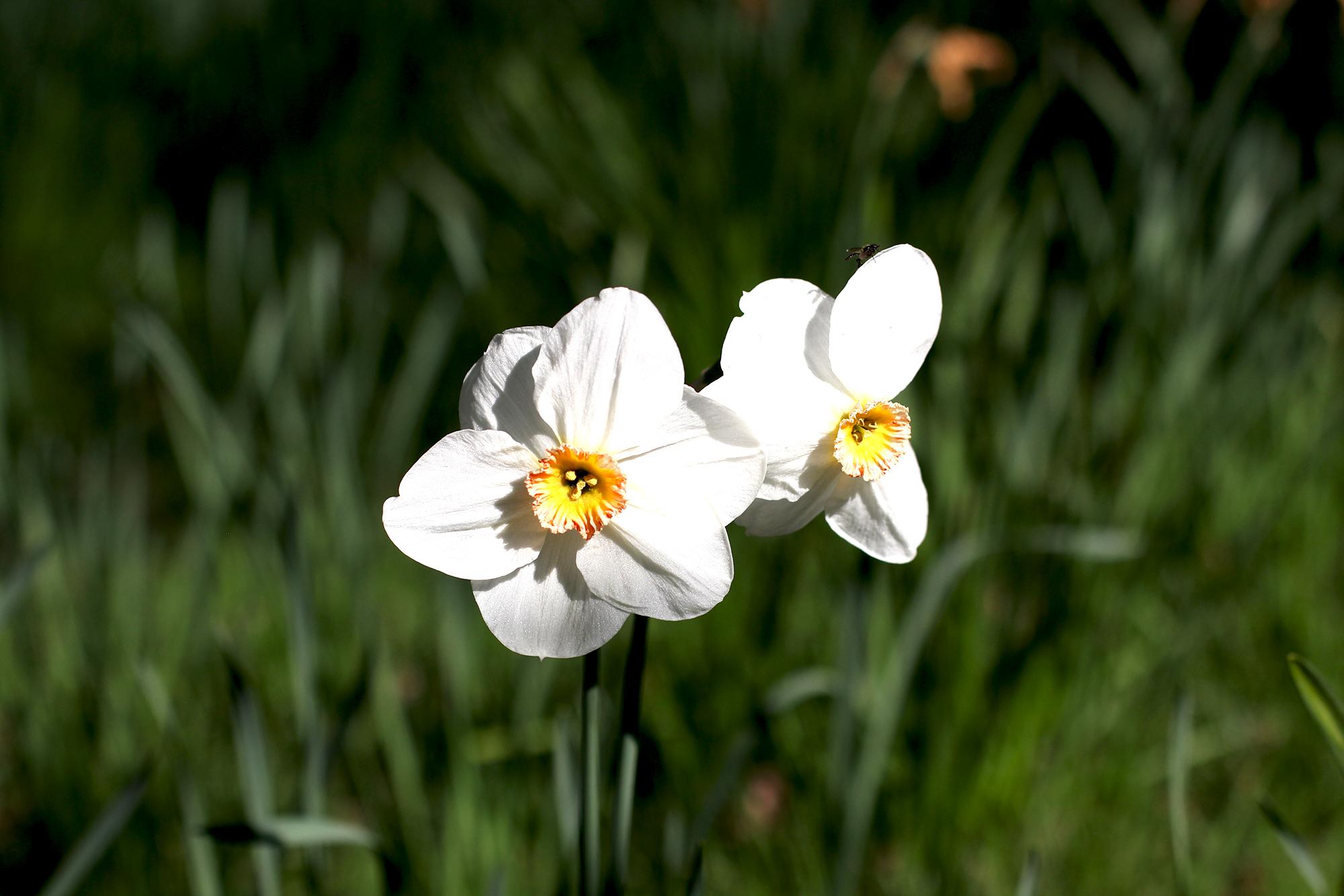 whiteflowers_STOCK.jpg
