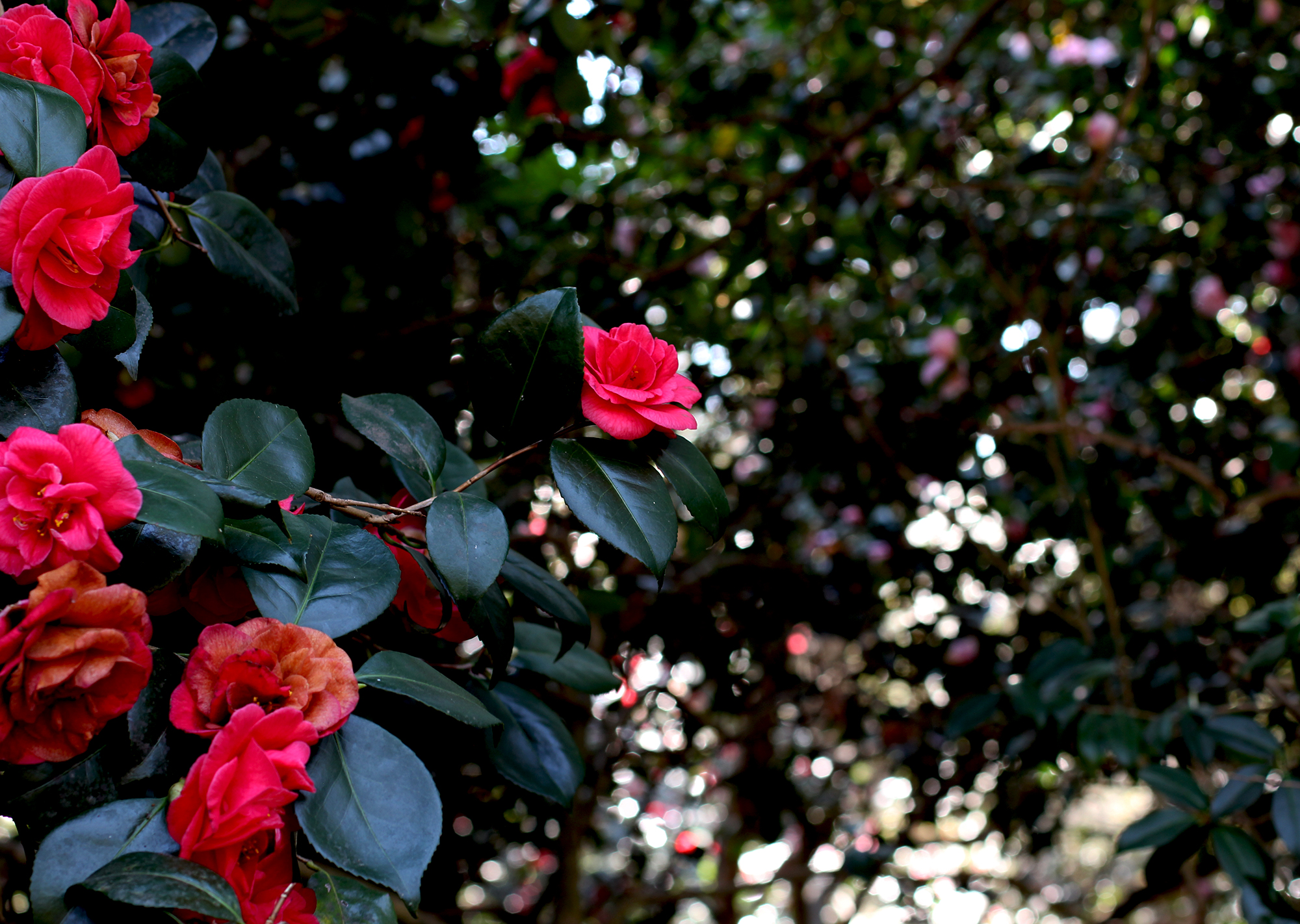 redflowers_STOCK.jpg