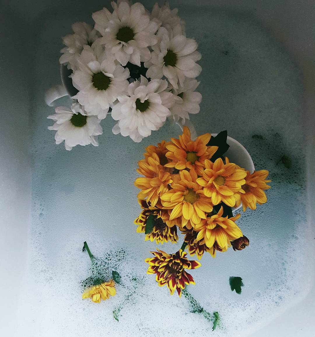 creative writing flowers bloom and grow