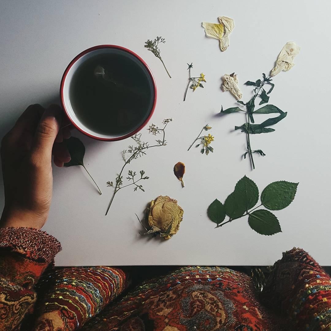 garden journal: what to do in winter to get your gardening fix