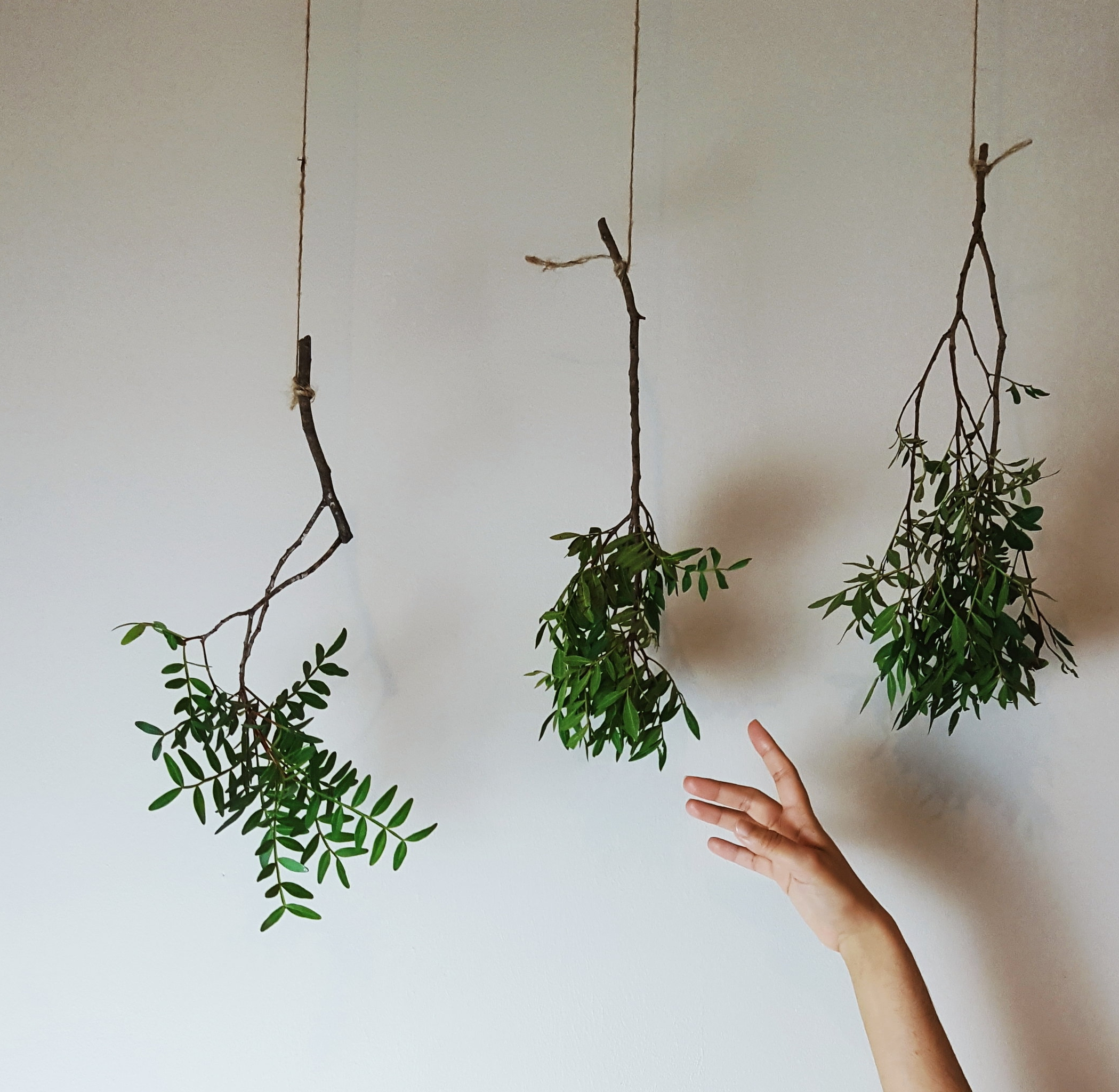 Energise your morning routine with the details - observing nature, cleaning work space, good playlist, verdure room mist.