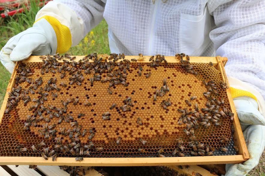 bees7.jpg