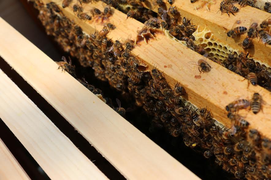 bees10.jpg