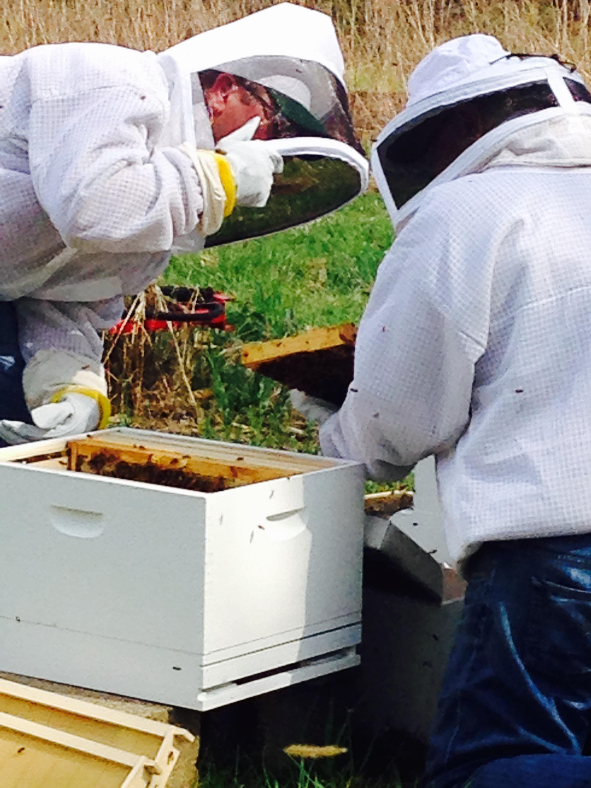D W bees.jpg