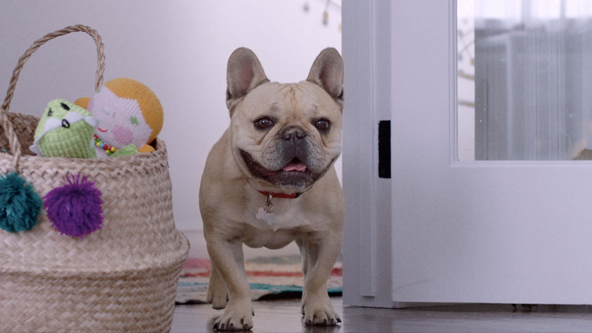 Milk-Bone   Dogs Love More