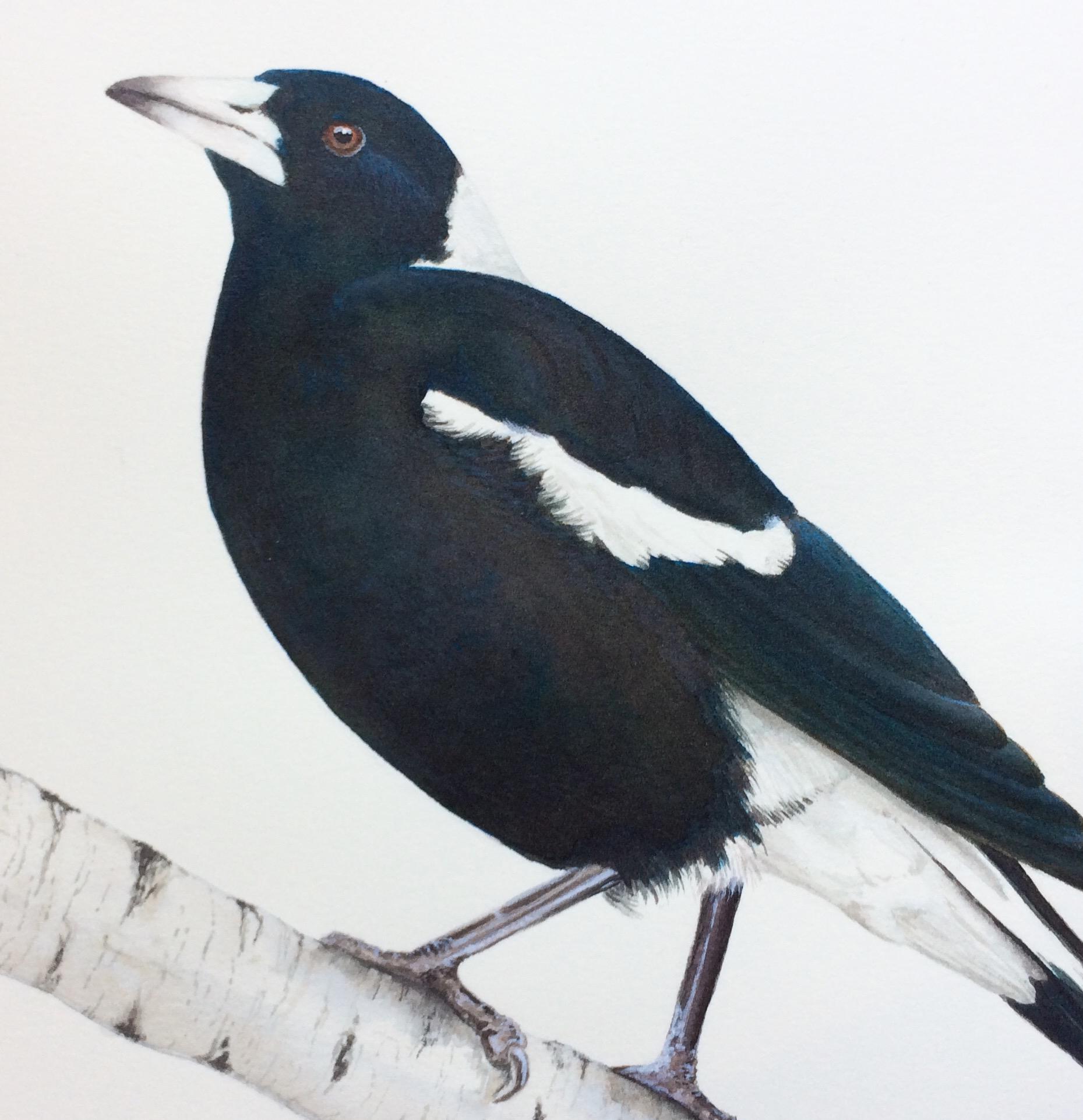 Magpie on birch