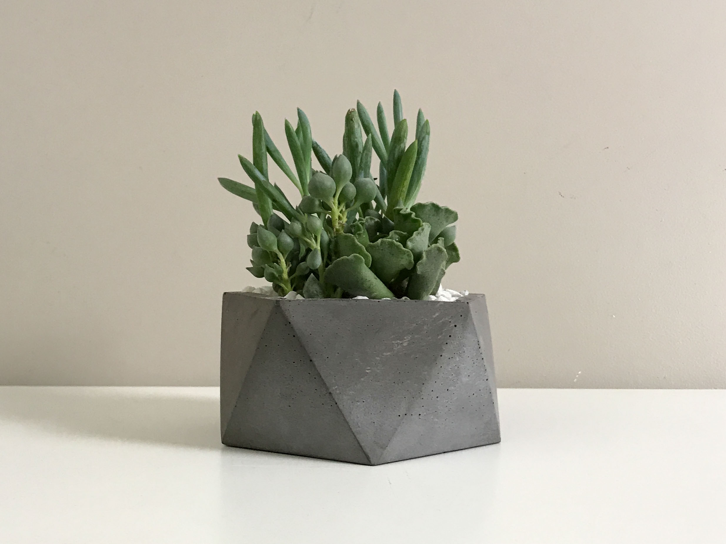 Copy of Dark Gray Charcoal Concrete Succulent Planter Pot by The Savvy Heart