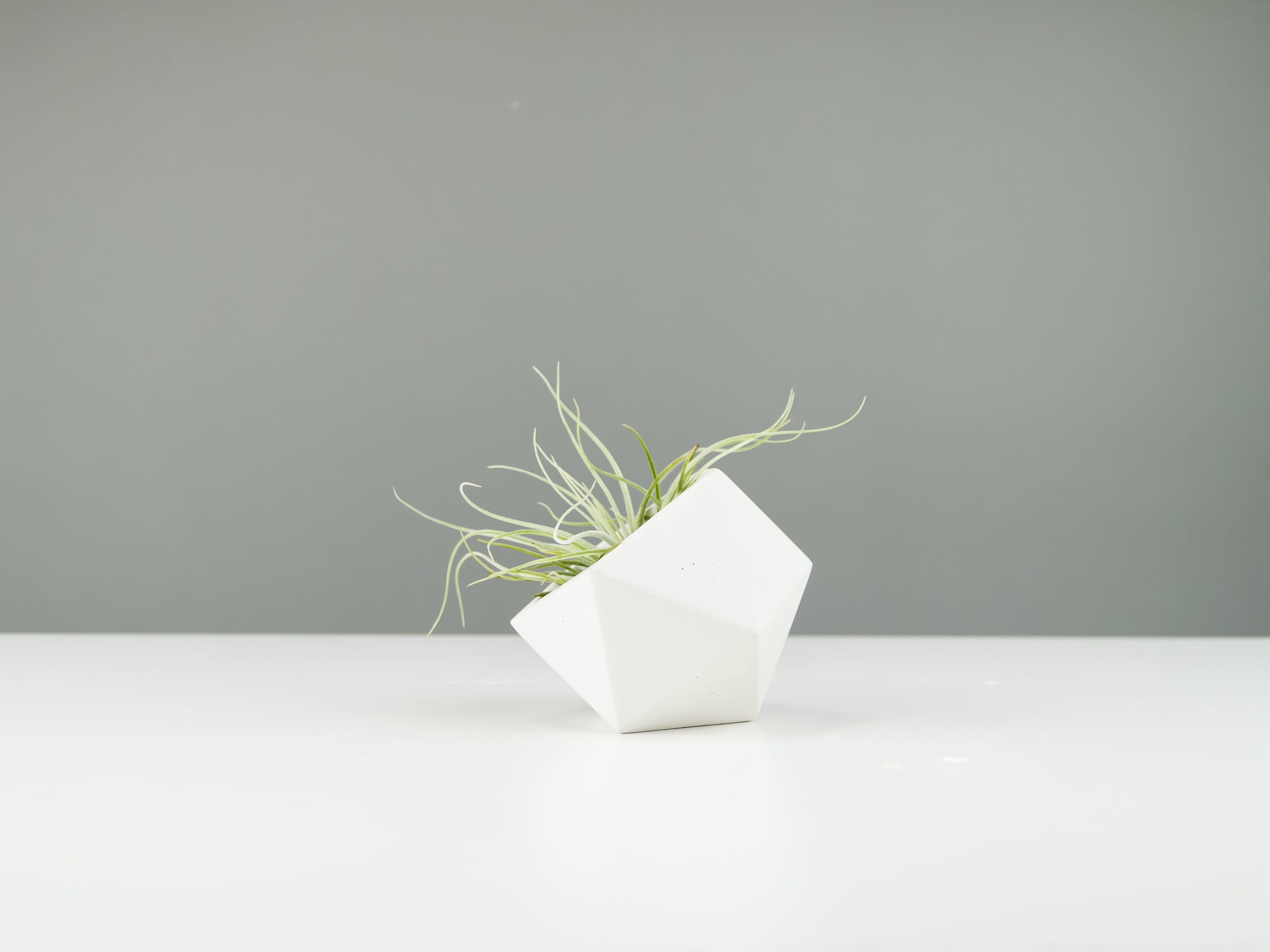 Minimal Gray Concrete Planter for Air Plants by the Savvy HEart