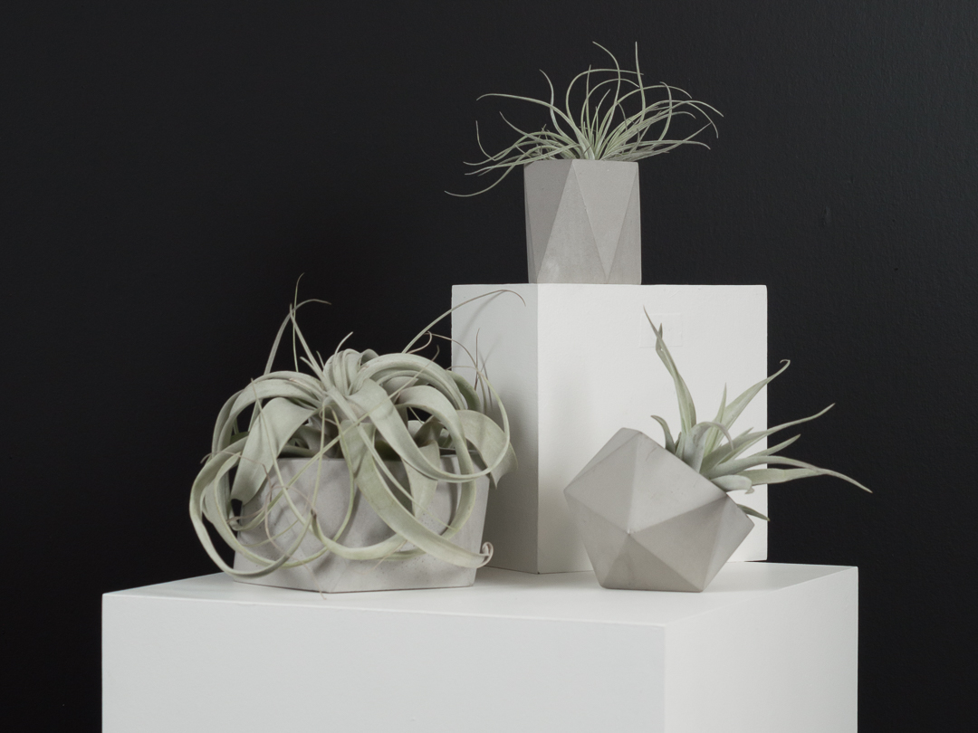 Beautiful tillandsia air plants in geometric concrete vessels by The Savvy Heart, a creative design studio in Seattle