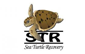 Sea Turtle Recovery