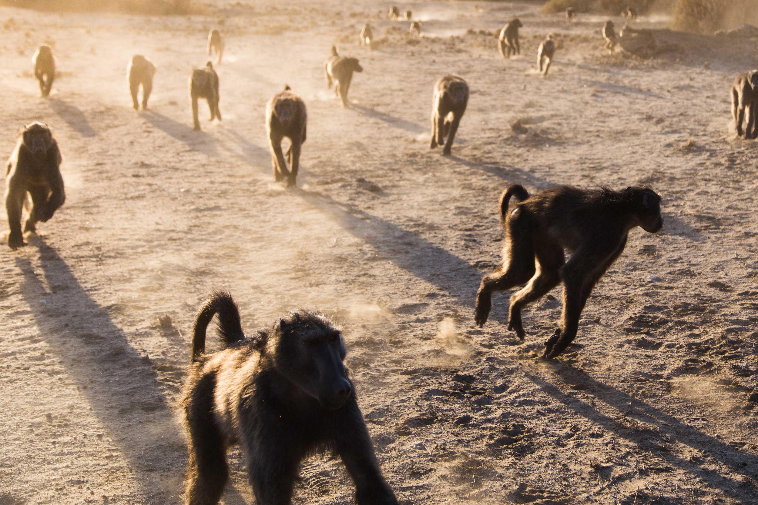 molly-gilmour_namibia_baboons.jpg