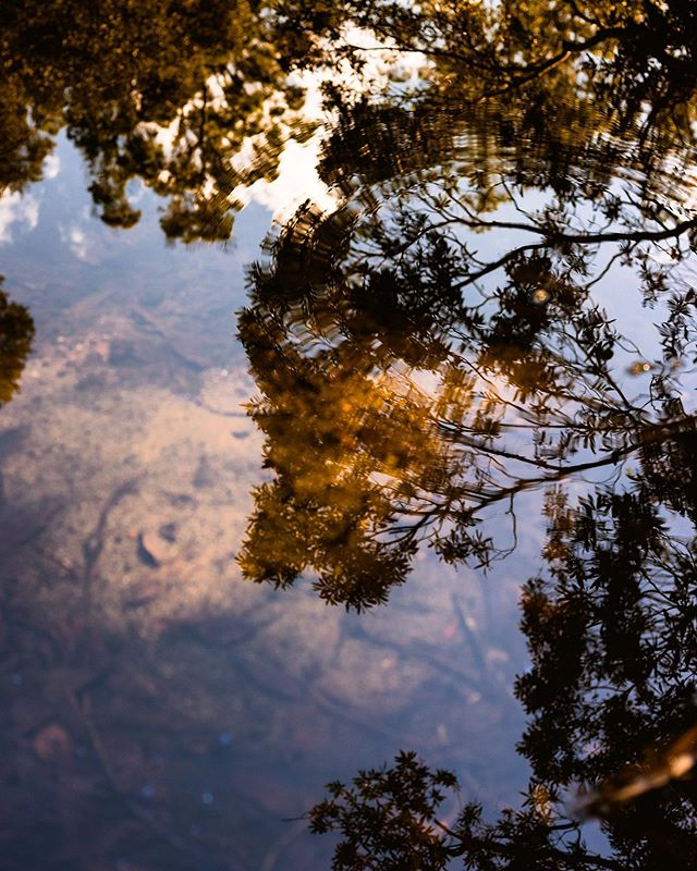 Reflections / Royal National Park, Australia / 2018
