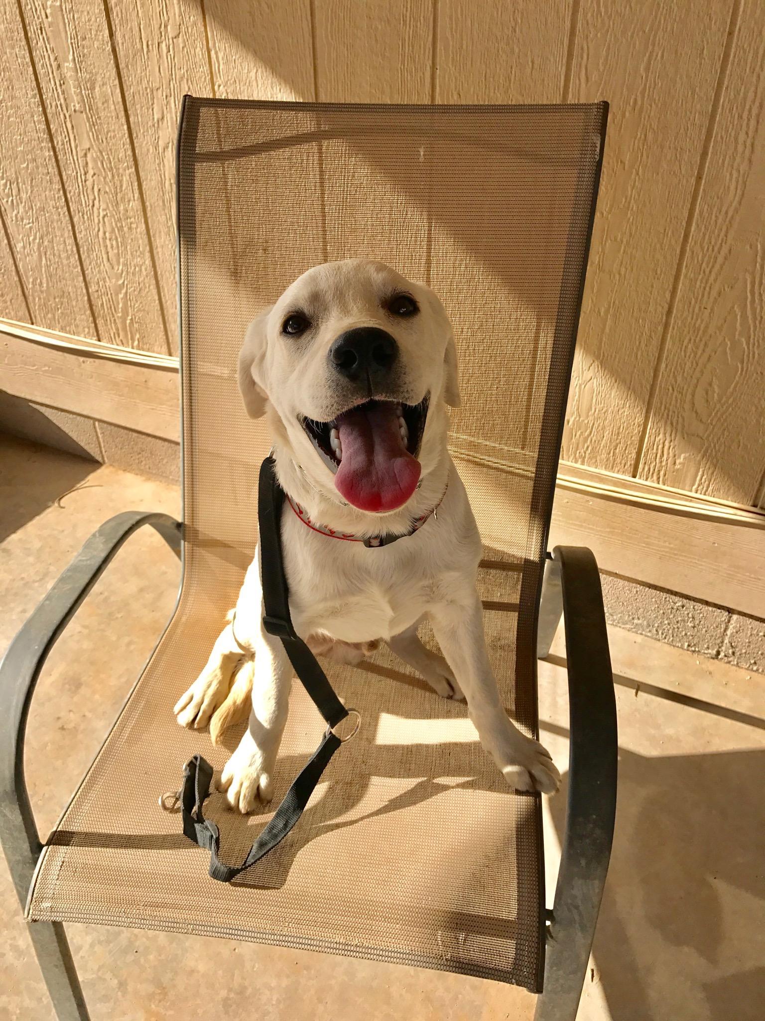 Diabetic Alert Dog in Training: Sit Stay