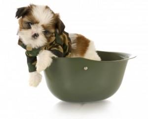 Puppy-Boot-Camp-300x242.jpg