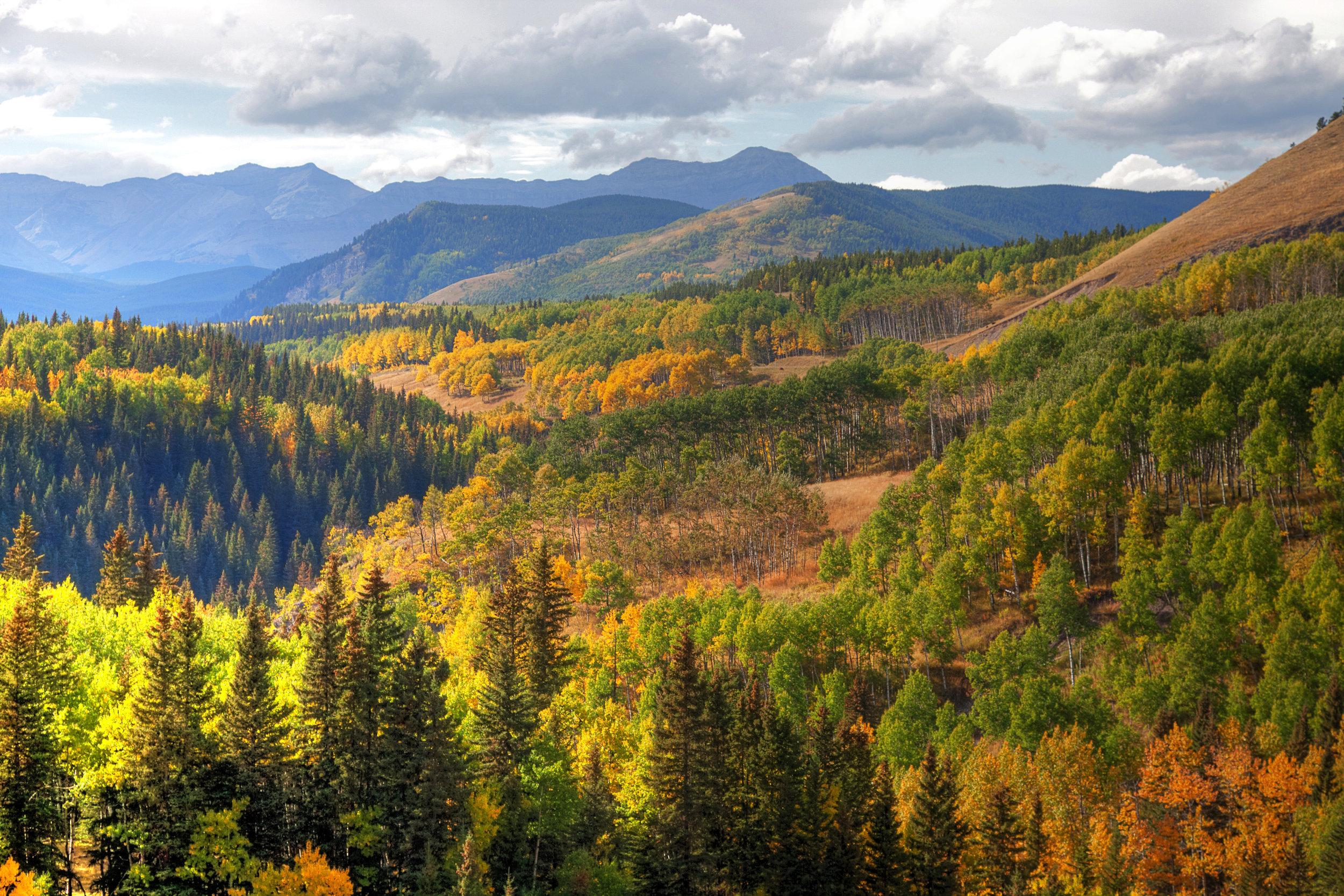 Fall Colors. Sheep River copy.jpg