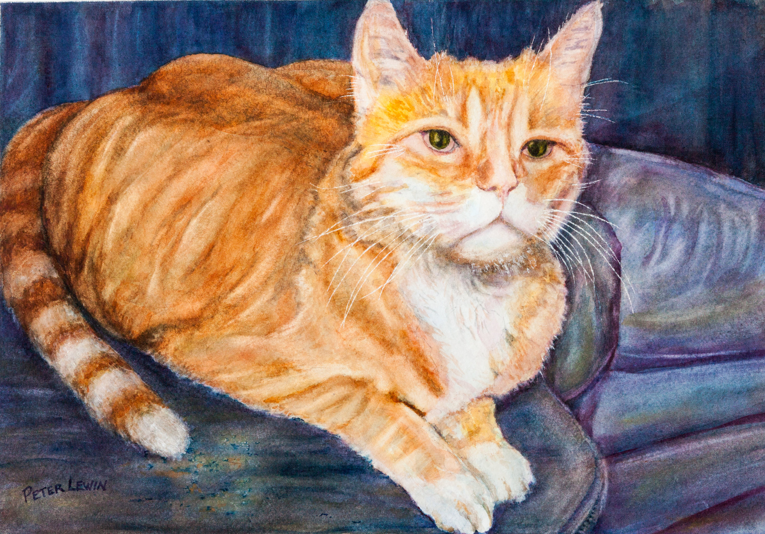 Milo the Cat 2 Card.jpg