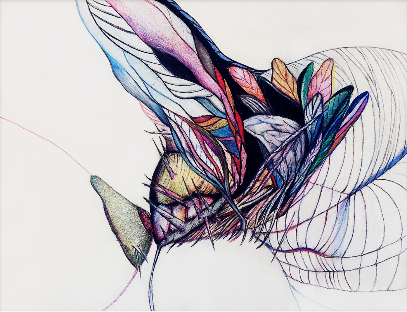 "Ripe  14"" x 11"" Colored pencils on paper 2016"