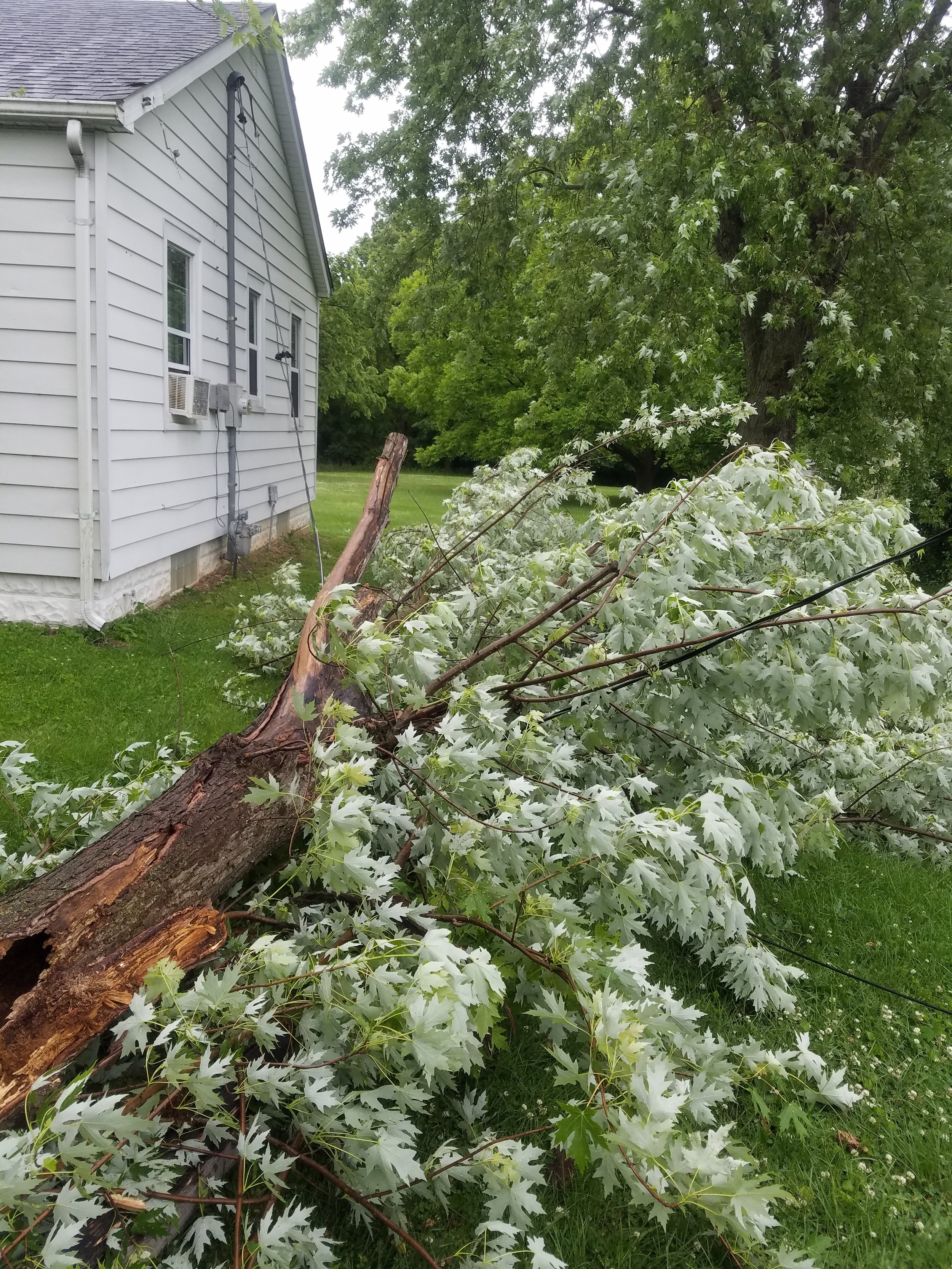 On 05/29/19, East Side Fire responded for several weather related incidents. This tree brought down a service line to a residence.