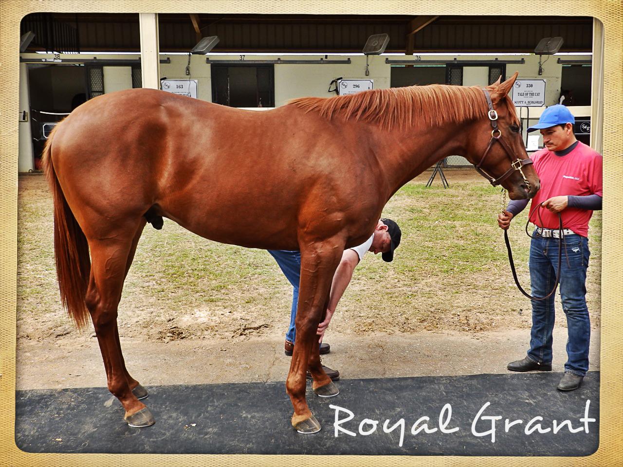 Royal Grant