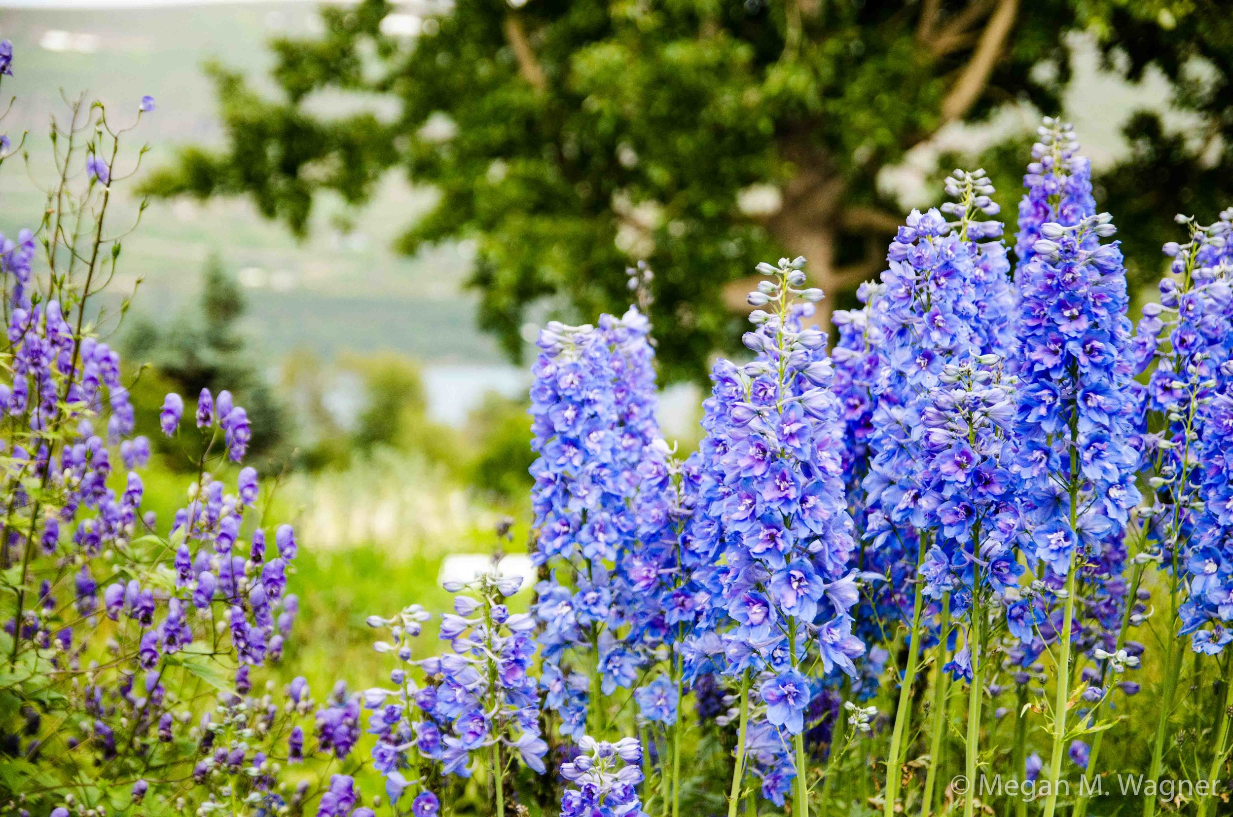 Botanical Gardens at Akureyri