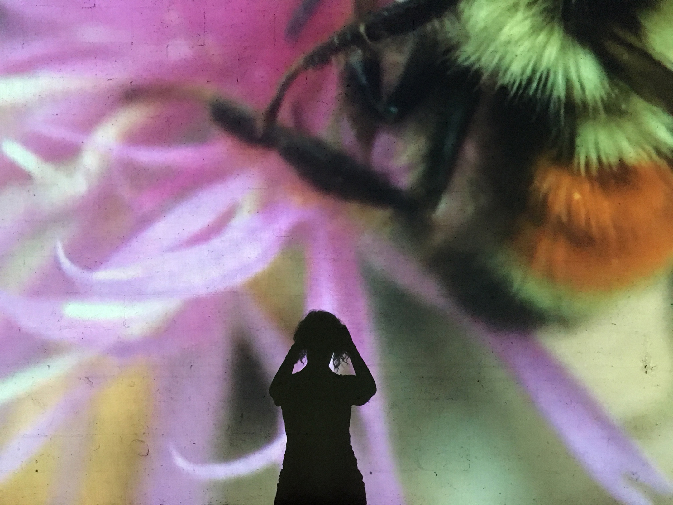 Shawn Hall, Bees In Mind, 2017, Still from Video loop with sound, shot from within installation (shadow not on loop). Video running time: 01:47:25. Image courtesy the artist.