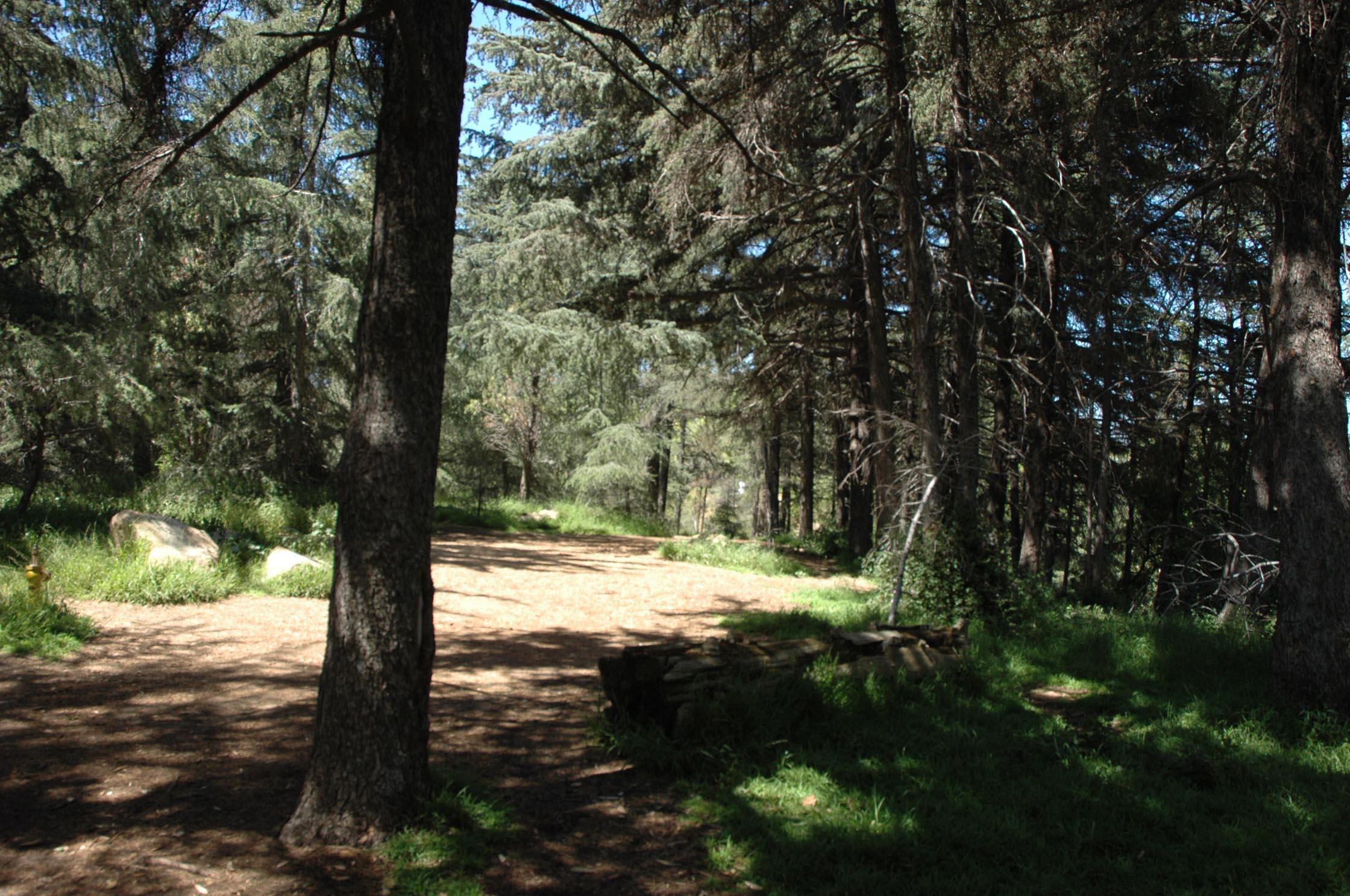 woods_before.jpg