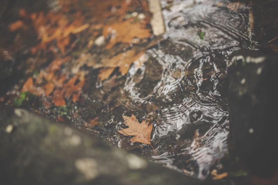 pexels-photo-205480-large.jpeg