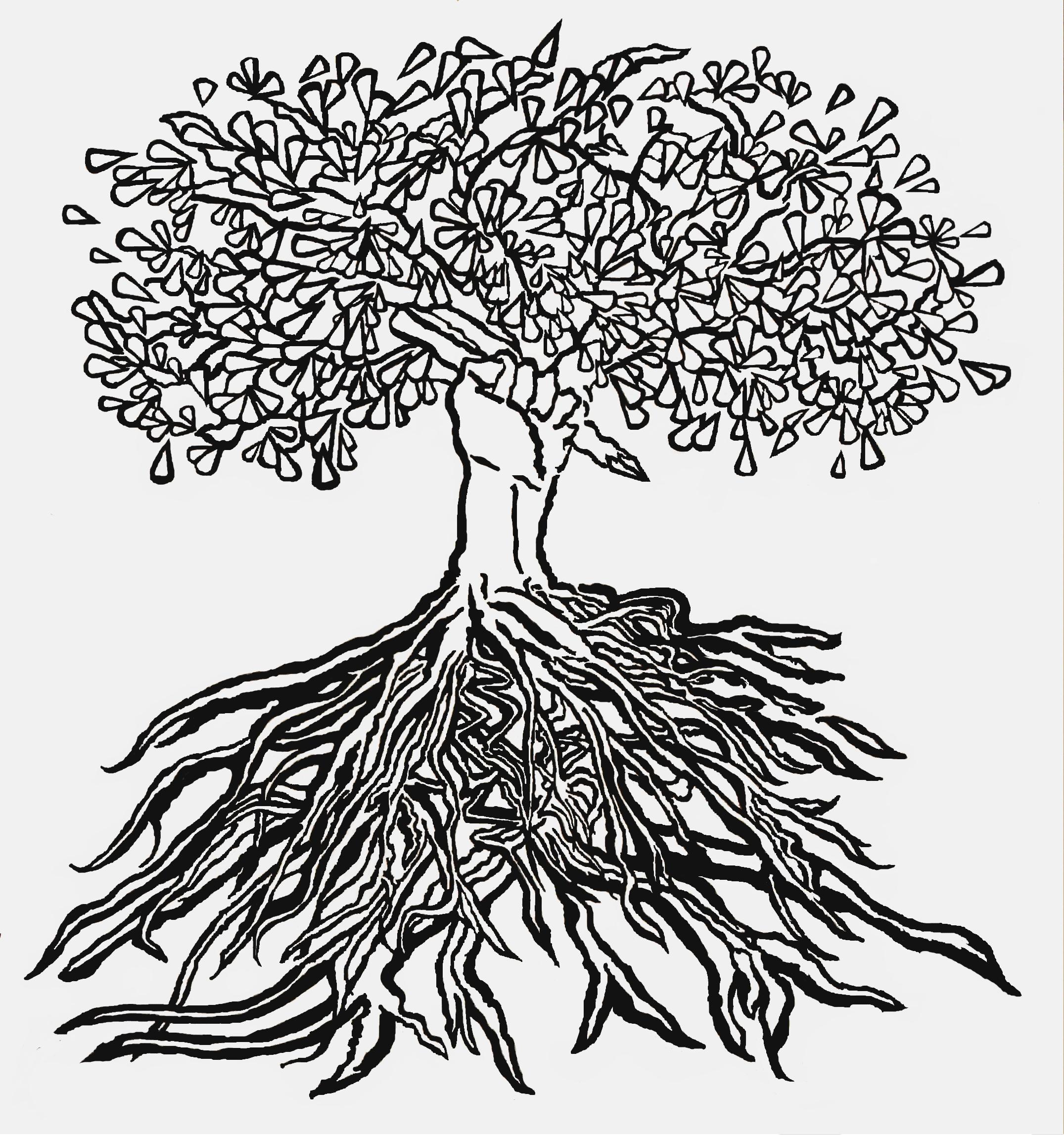 roots_5x6-9-14.jpg