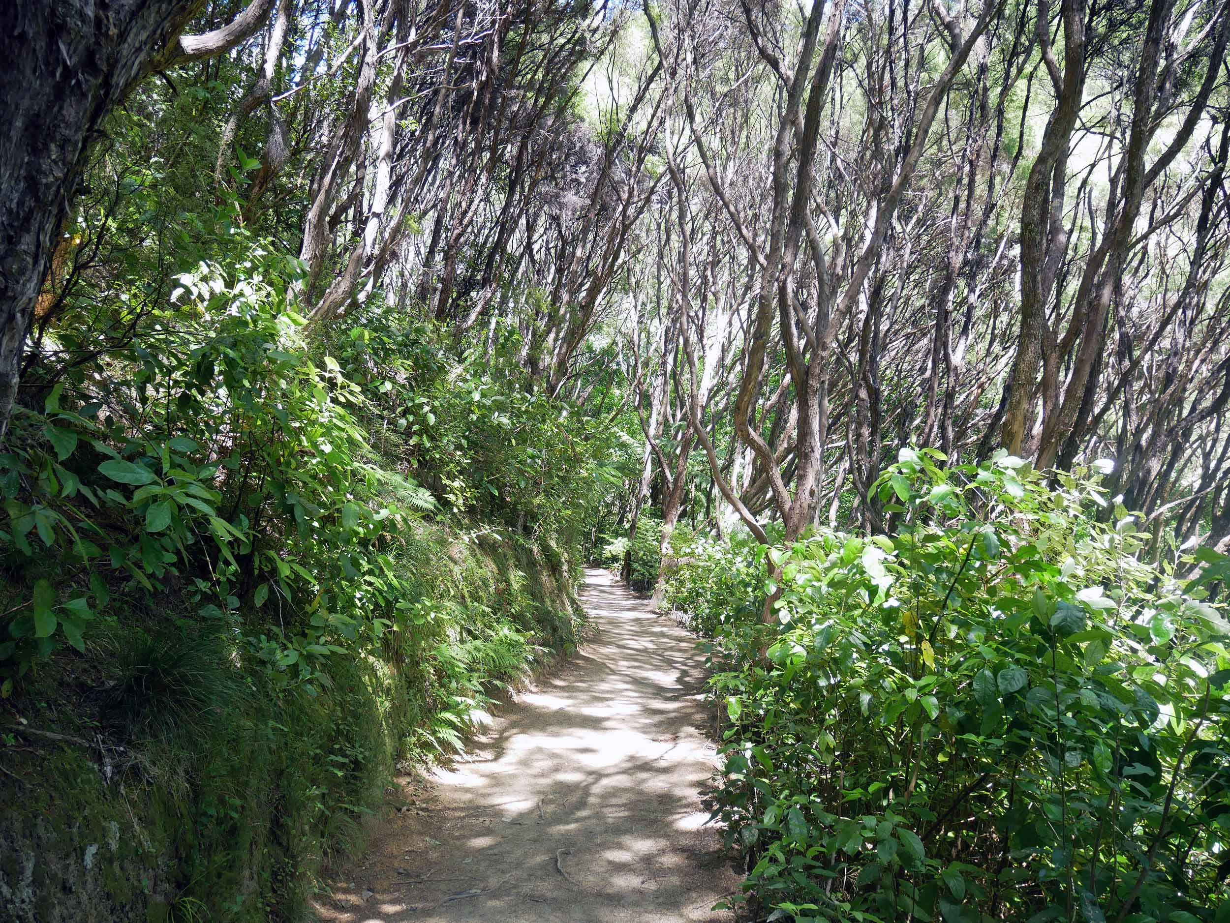 The hike to Anapai Bay is the first section of the Coast Track (a 3-5 Day return) in Abel Tasman National Park (Jan 17).