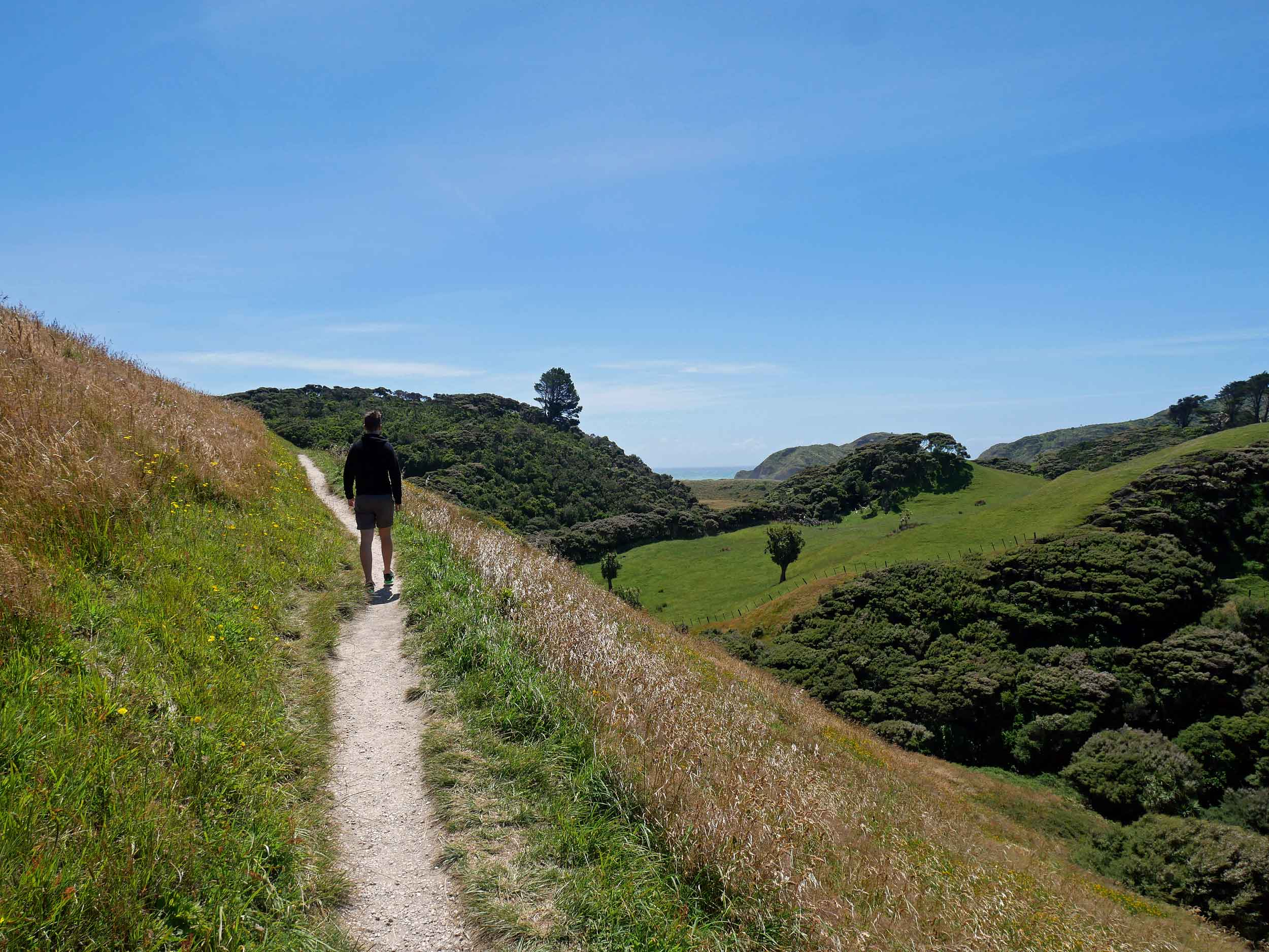 The winds on the walk to Wharariki Beach just west of Farewell Spit (the northern most point of the South Island) nearly blew us off the track (Jan 13).