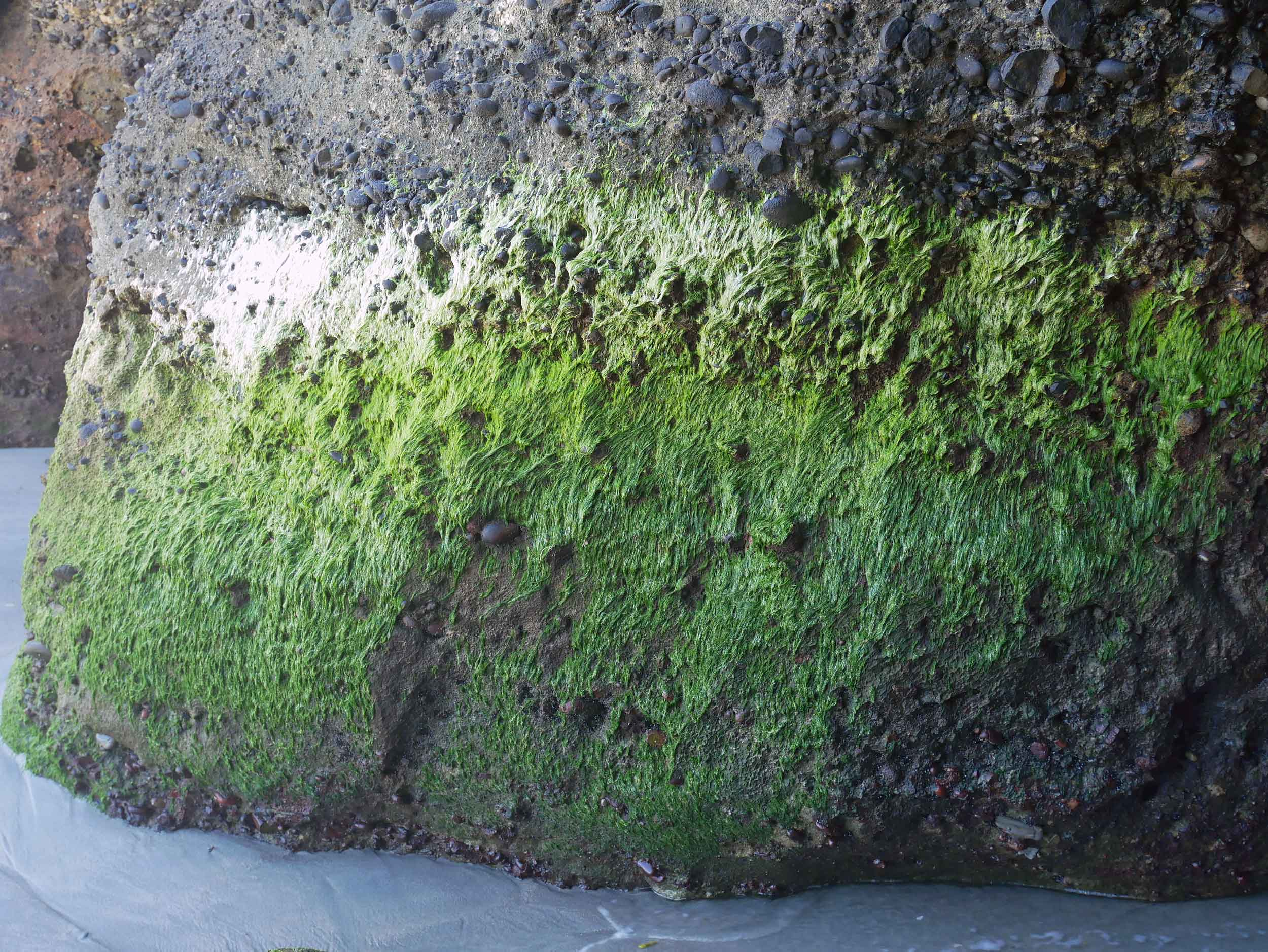 The ombre mossy greens covering the giant rocks along Wharariki Beach (Jan 13).