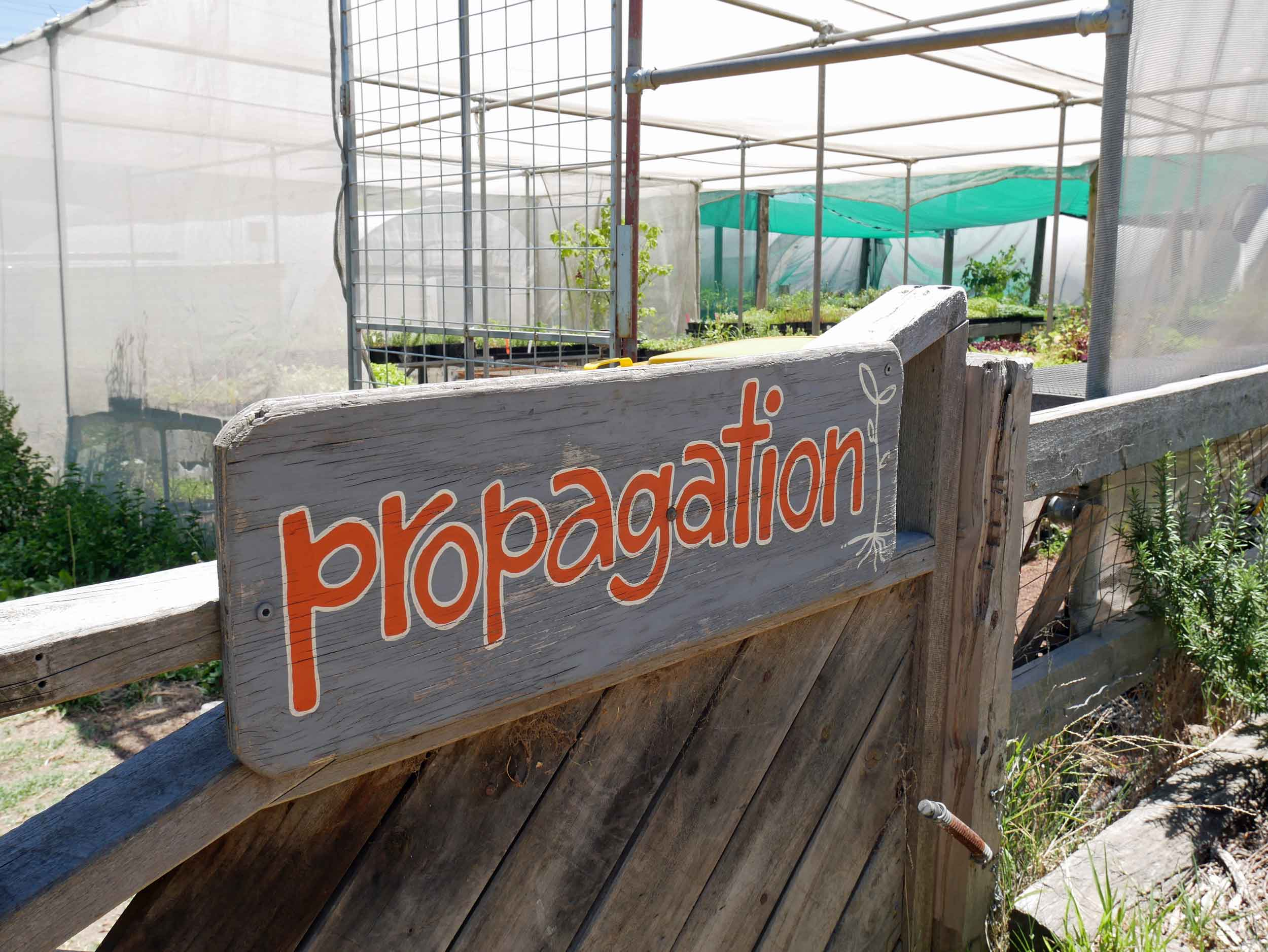 On site plant propagation is one of the many services offered by this dynamic community center - plants are for sale at the market (Jan 26).