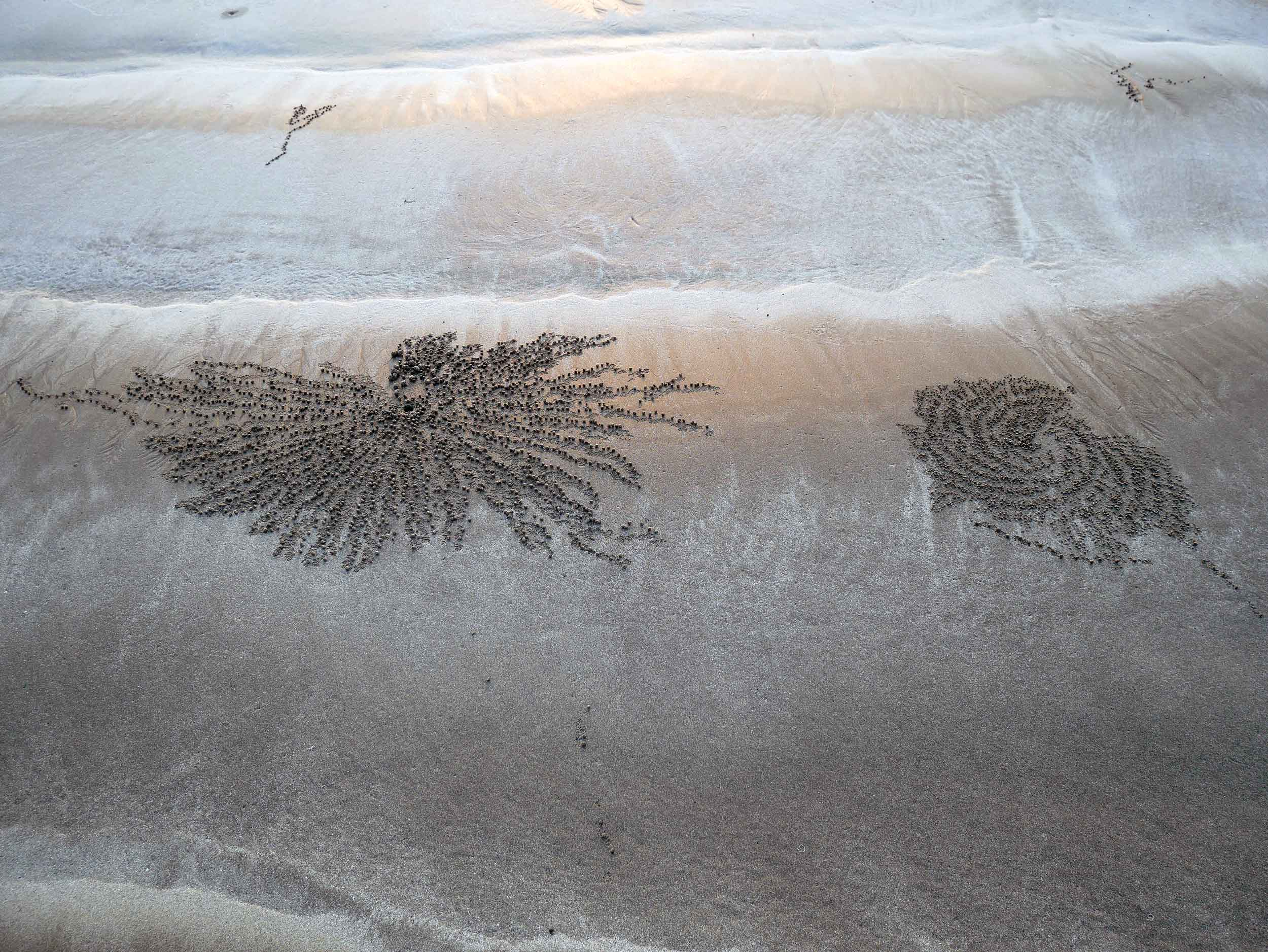 The beautiful art of the tiny Sand Bubbler crabs, who leave behind balled up excess sand as they hunt for food.